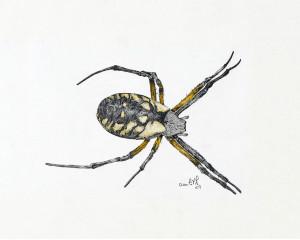Oeuvre originale Araignée des jardins (Argiope aurantia): Writing Spider