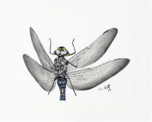 Oeuvre originale Aeschne du Canada (Aeshna canadensis): Dragonfly
