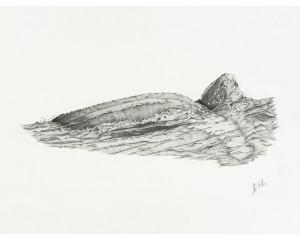 Oeuvre originale Tortue luth océan (Dermochelys coriacea): Leatherback Sea Turtle